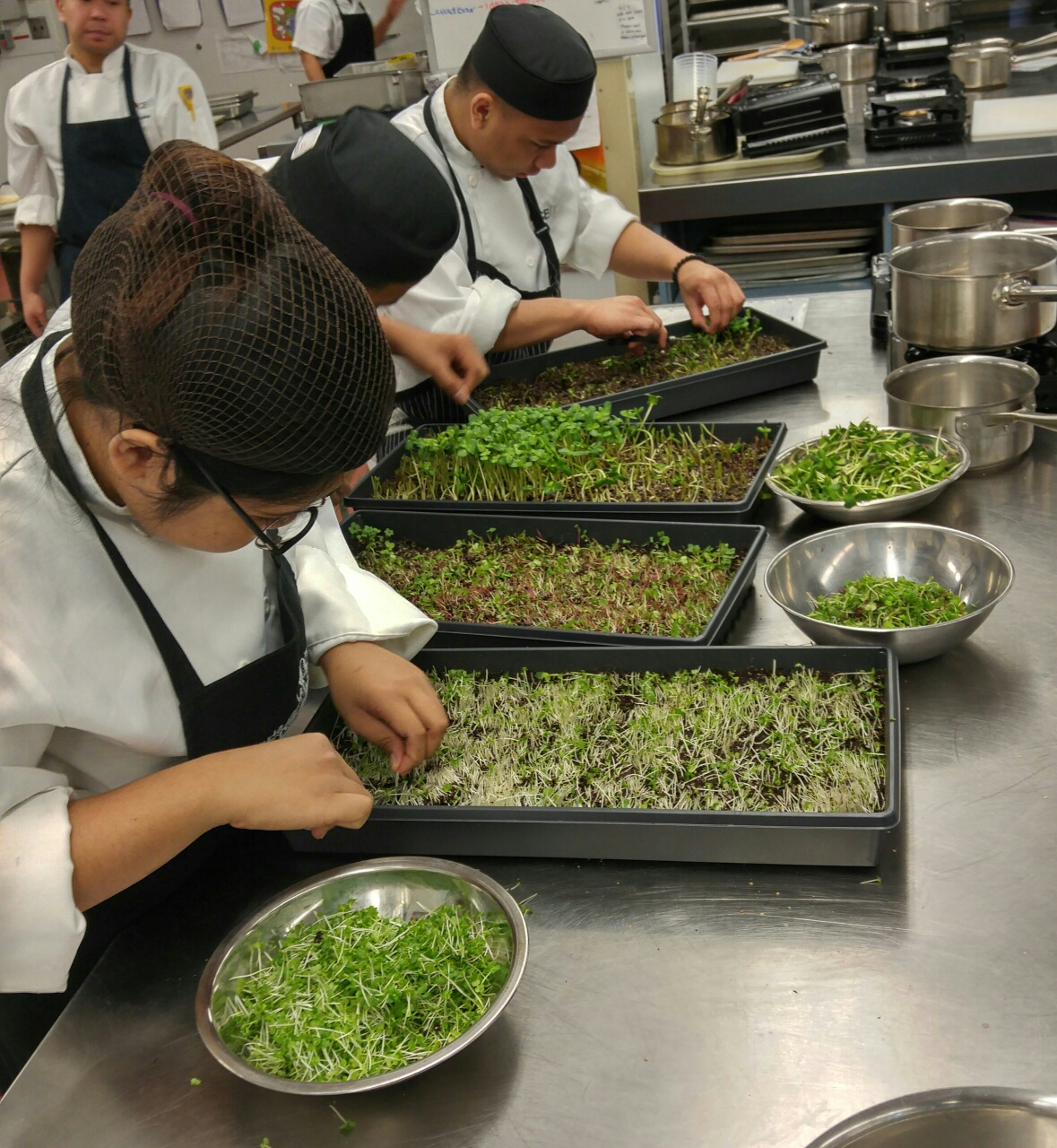microgreens at Tupper